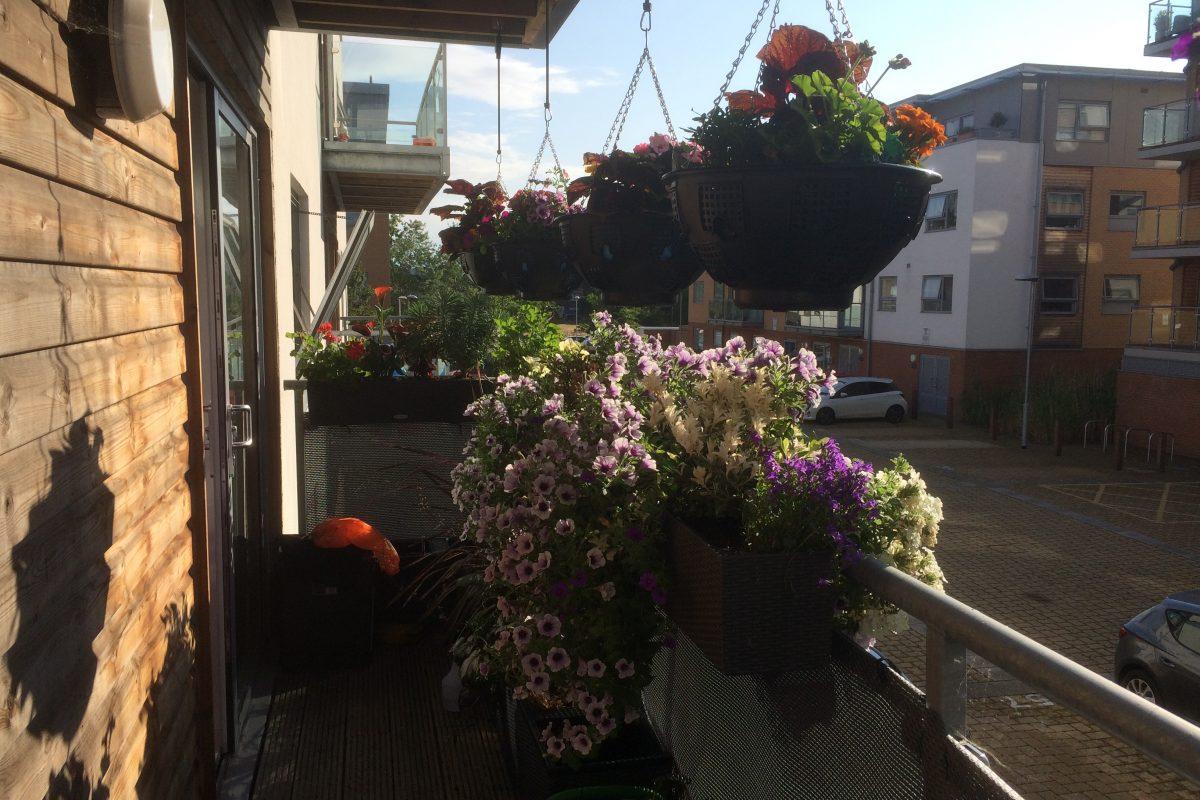 My balcony in bloom